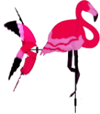 Wind Wheel 3-d Flamingo